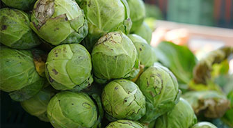 brussels sprouts large scale farming