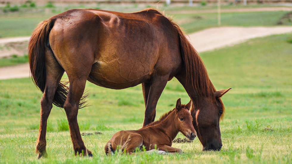 caring for horses